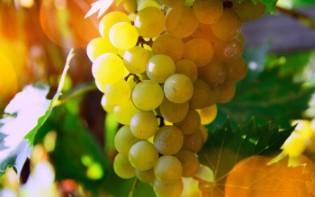 Afbeelding 3 wijnglazen gevuld met rode, witte of rosé wijn